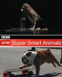 сериал Гении из царства животных / Super smart animals онлайн