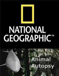 сериал Анатомия крупнейших животных / Animal Autopsy онлайн