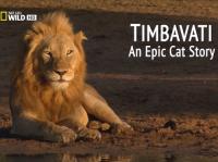 сериал Тимбавати: Мир диких кошек / Timbavati: An Epic Cat Story онлайн